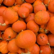 Winter Squash Uchiki Kuri - 50 grams - Bulk Discounts Available